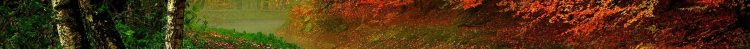 cropped-wpnature-com-forest-autumn-grass-trees-fall-nature-woods-river-splendor-leaves-hd-iphone-wallpaper.jpg