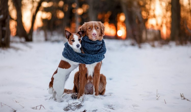 things-to-keep-dogs-warm-in-winter